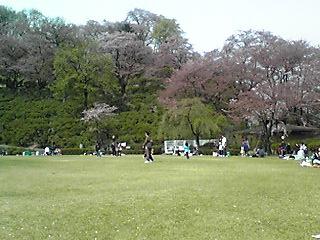 西山公園の桜3
