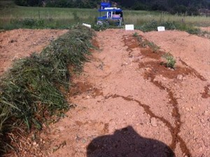 俺の農地2013052612