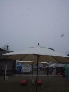 激しく雪が降ってきた
